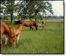 good grazing land for sale